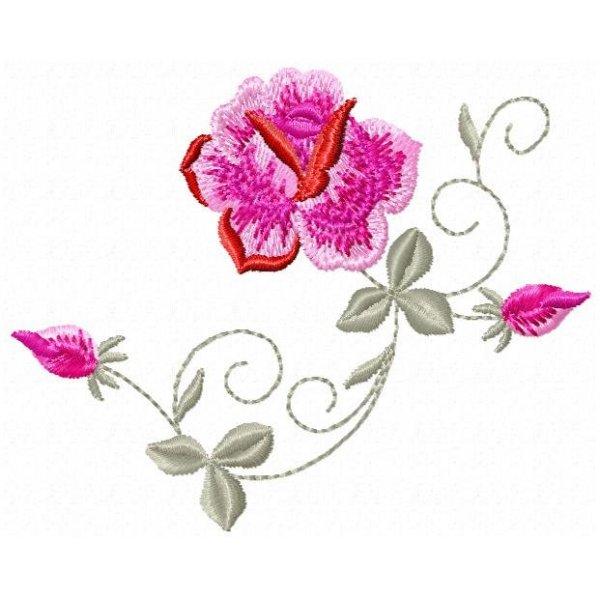 Rosa Maravilha