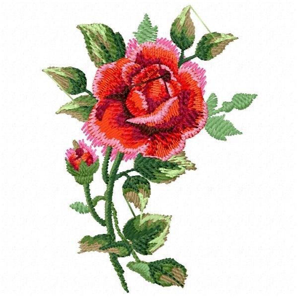 Floral 60 Rosa